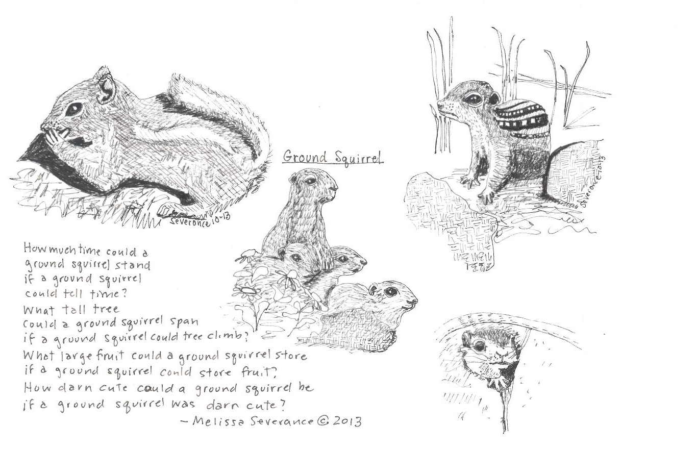 Ground Squirrel by Melissa Severance